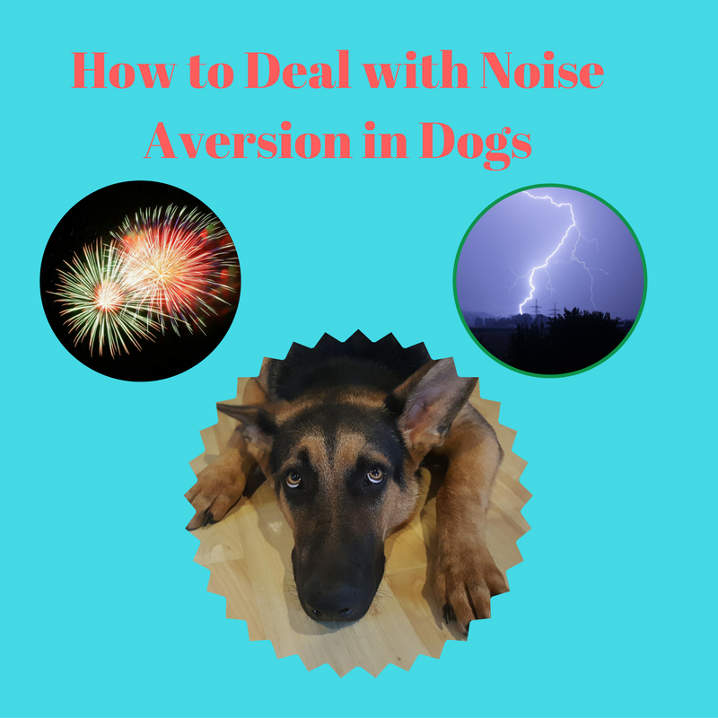 How to Deal With Noise Aversion in Dogs - The Animal Doctor Blog